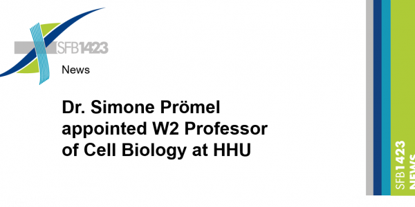 Dr. Simone Prömel appointed W2 Professor of Cell Biology at HHU